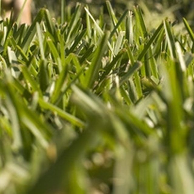 How To Make St Augustine Grass Greener And Fuller Hunker Grass Care St Augustine Grass St Augustine Grass Care