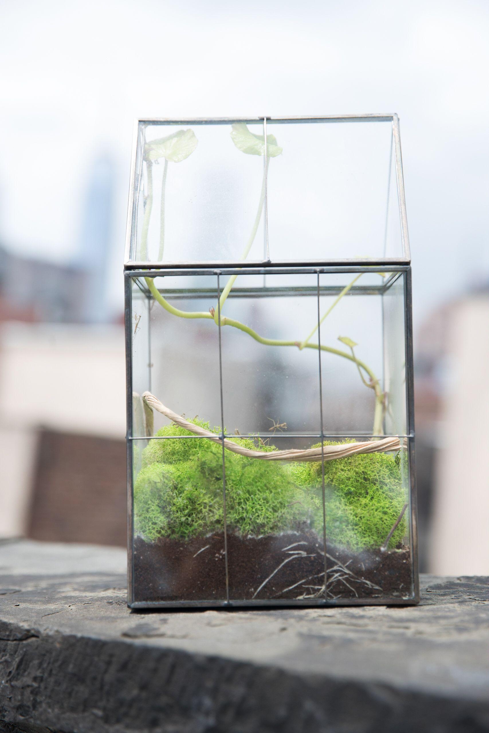 A Modern Take On A Praying Mantis Enclosure Stick Insect Praying Mantis Orchid Mantis