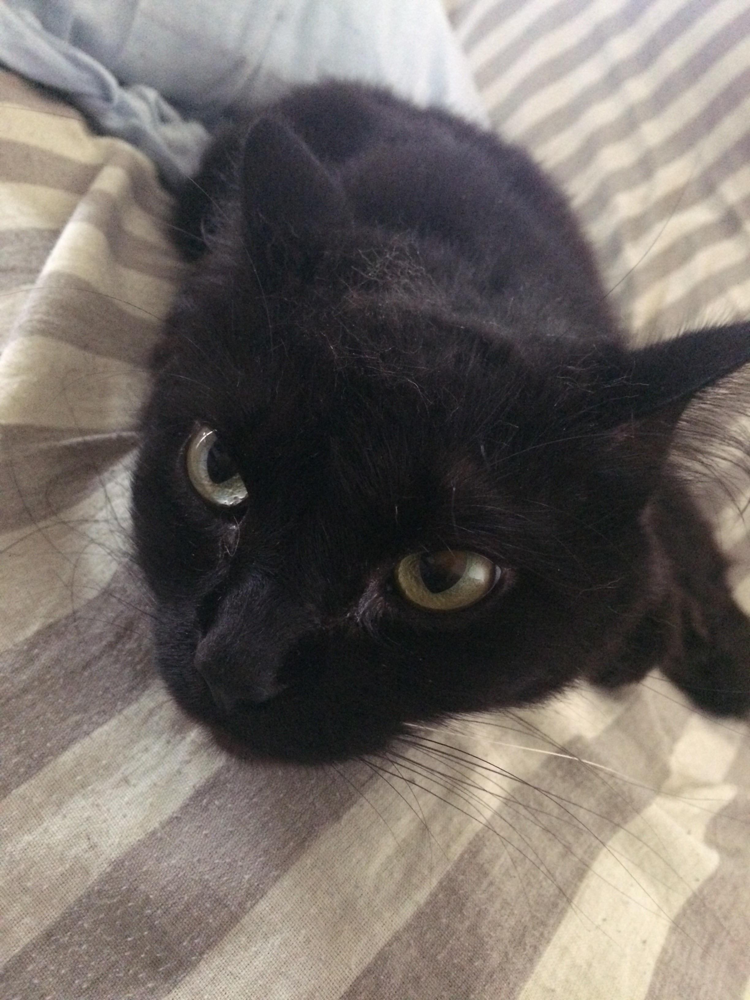 Good Morning Reddit Teelast Com Cats Funny Cat Memes Funny Cats