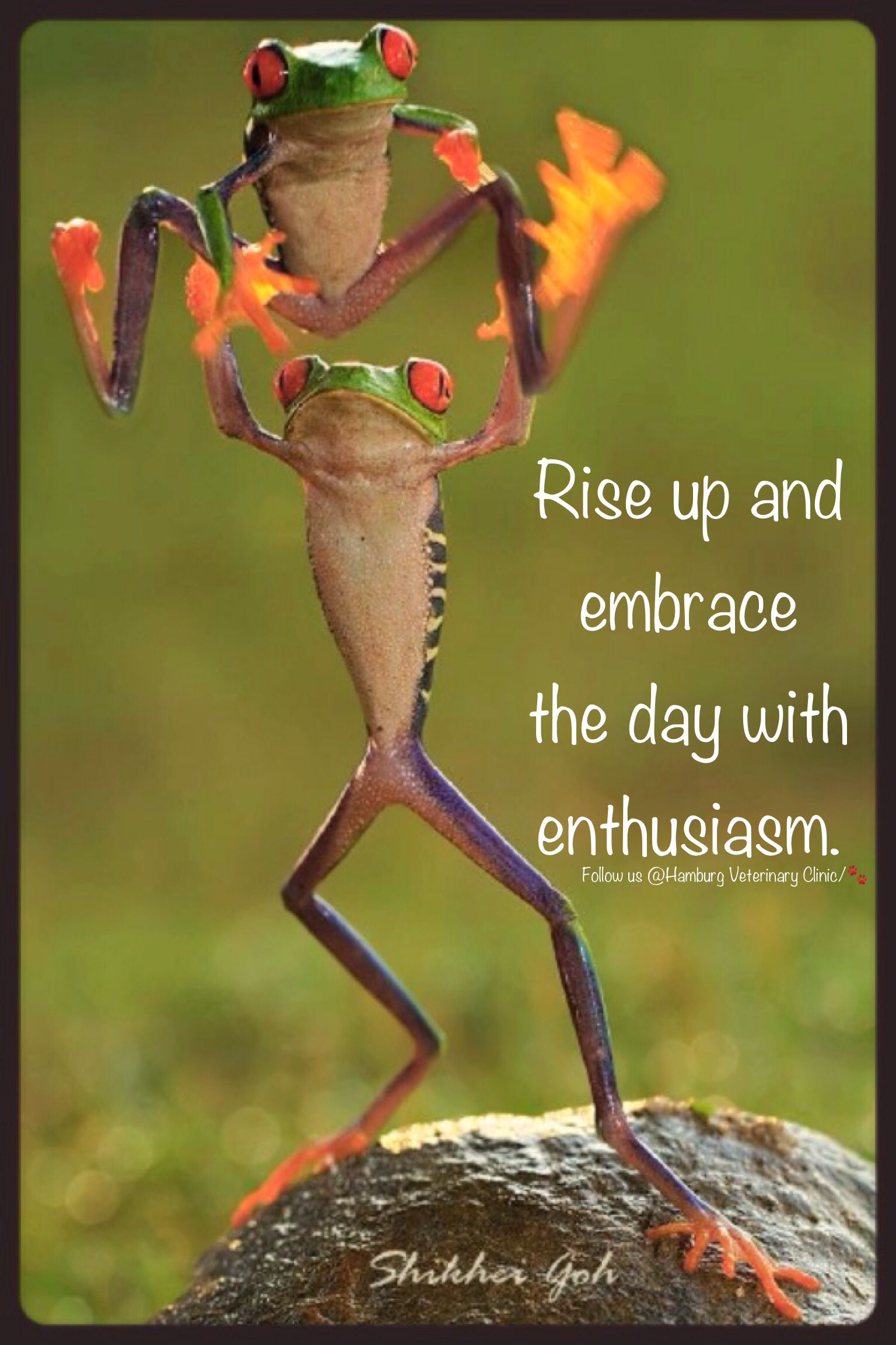 Rise and Shine | Wake up | Morning | New day | Greet the ...