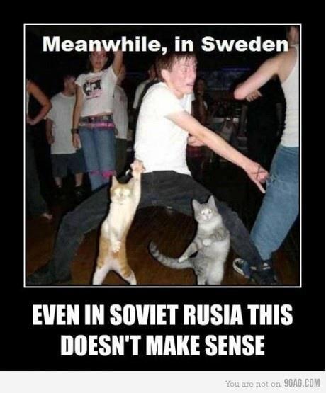 Funny Pictures Funny Quotes Lustig Lustige Bilder Katze Lustig