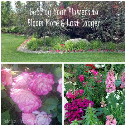 secrets    flowers bloom  spring