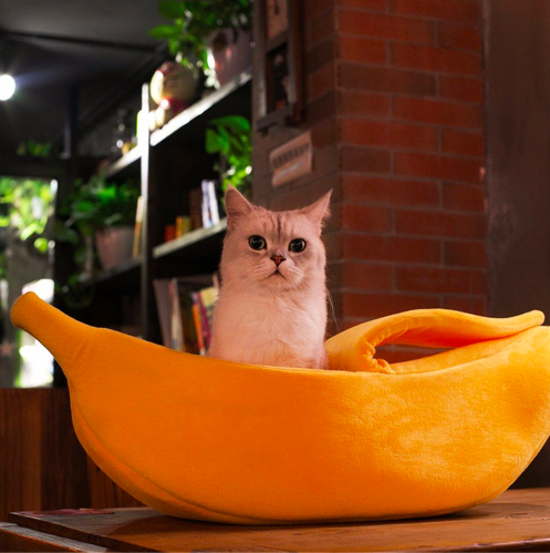 Banana Peel Cat Bed Big fluffy dogs, Dog beds for small