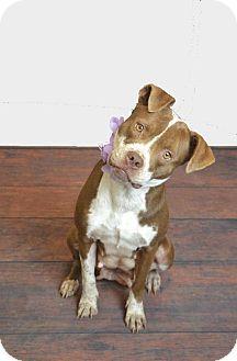 Pin By Lisa Barker On Lisa Barker Pets Dogs Shelter Dogs
