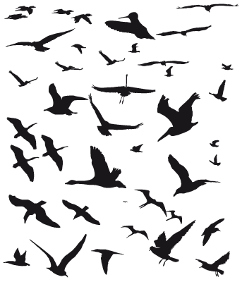 Bird Designs Line Drawing Google Search Flying Bird Silhouette Bird Silhouette Birds Flying