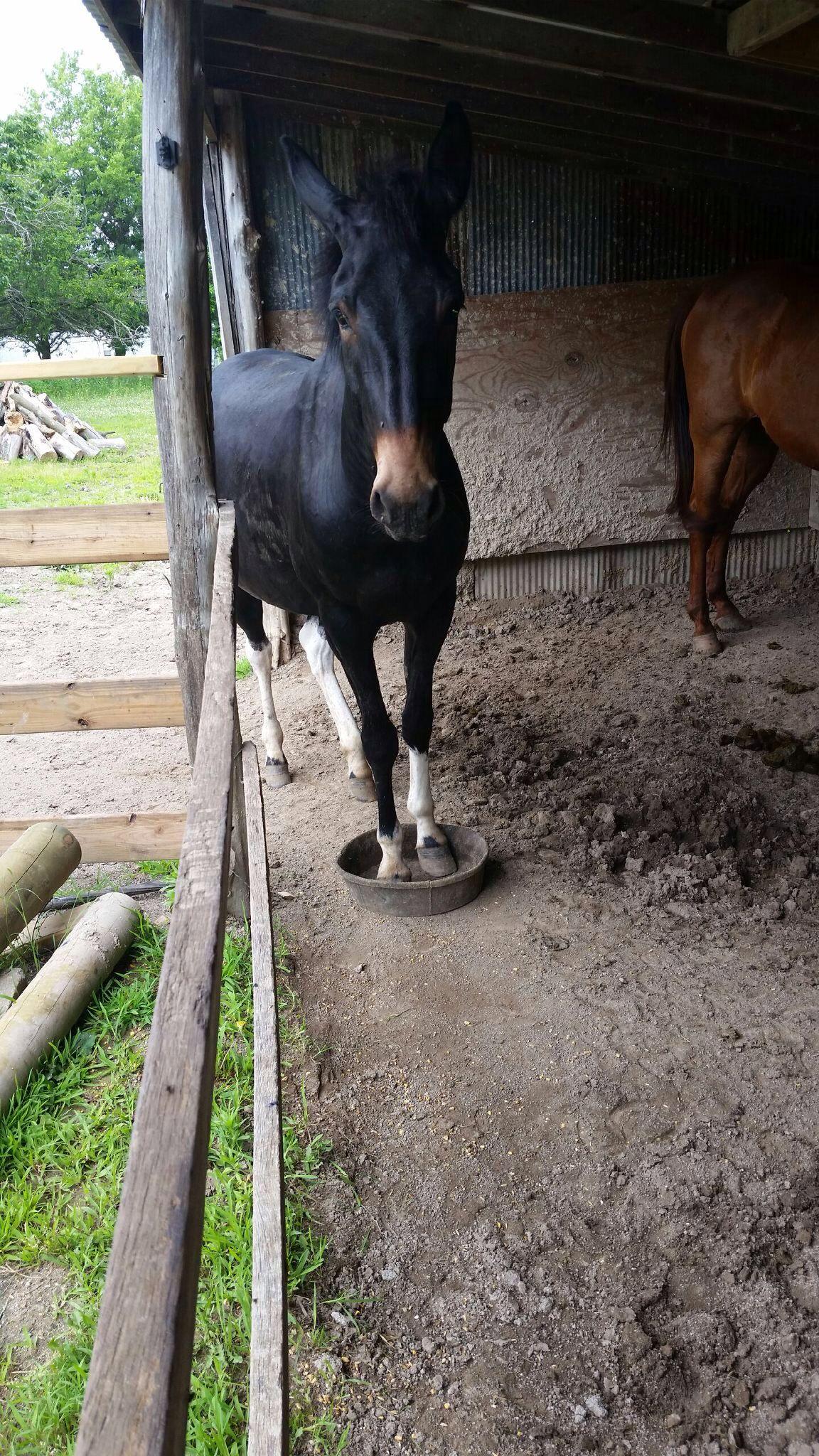 Pin on Donkeys & Mules