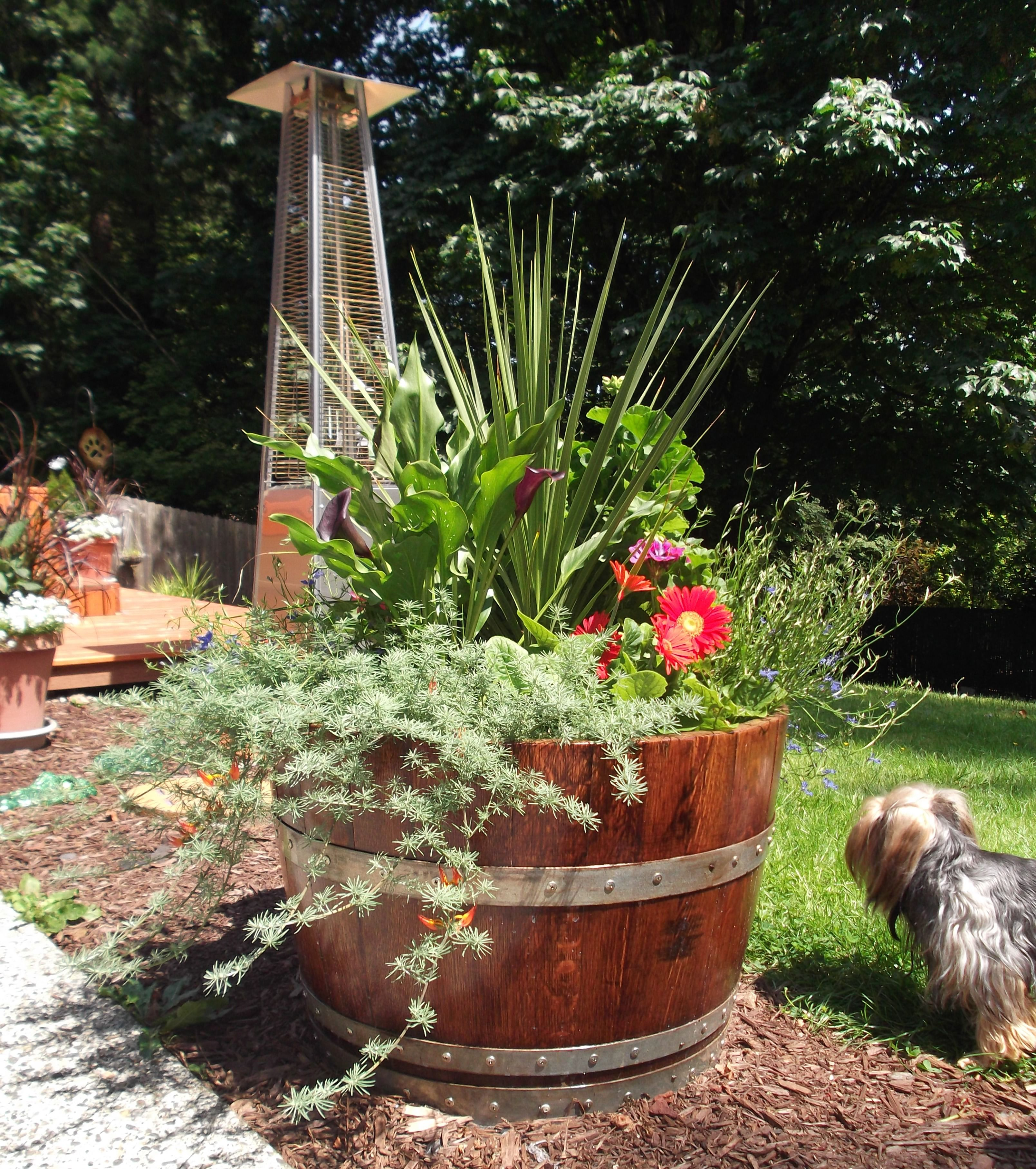 Oak Wine Barrel Flower Pots Each Stave Is Secured With A Screw To Ensure No Warping Stained And C Whiskey Barrel Planter Barrel Planter Wine Barrel Planter
