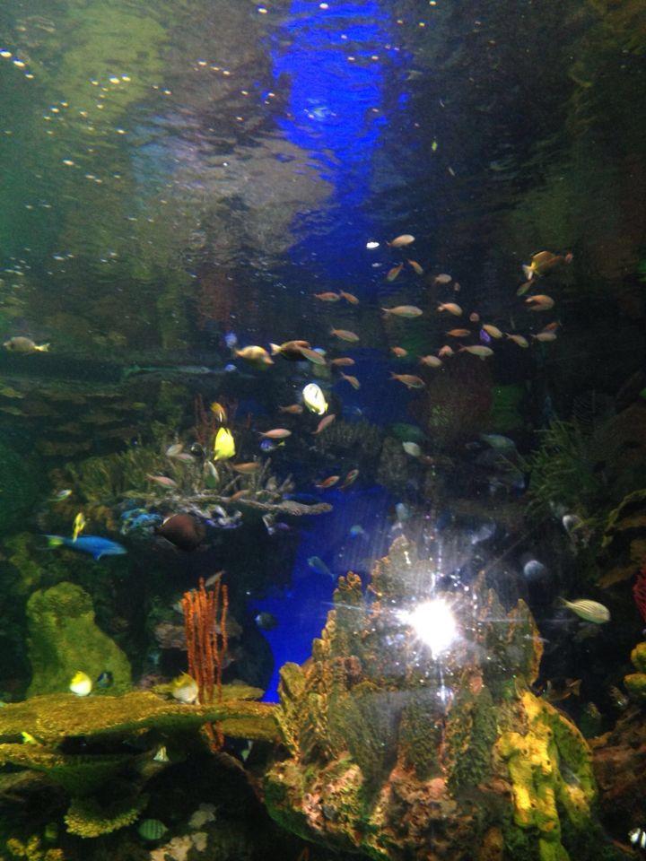 Ripley\u0027s Aquarium has a great team of conservationists who are - marine biologist job description