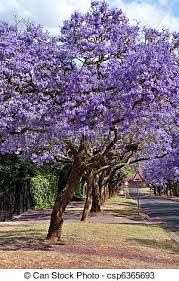 Boom Met Bloemen.Afbeeldingsresultaat Voor Boom Paarse Bloemen Nieuw Zeeland