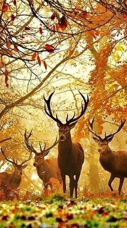 Épinglé par Kim M sur Autumn Foliage | Pinterest | Hotes, Chasse ...