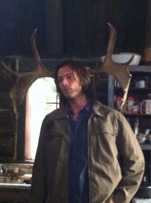 "Jared Padalecki's birthday tweet. ""An older, more pensive moose."""