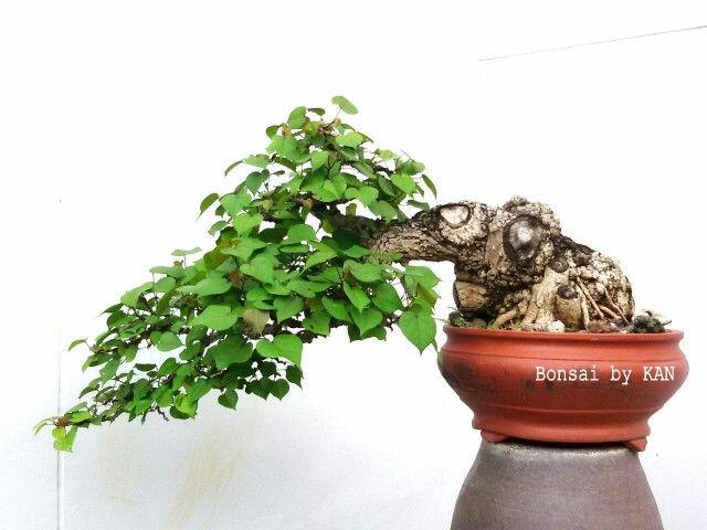 Bonsai Bonsai By Kan Pinterest Bonsai Terrarium Und Big Tree