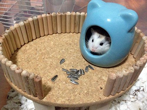 ...and we have a DIY platform for your hamster! Hamster