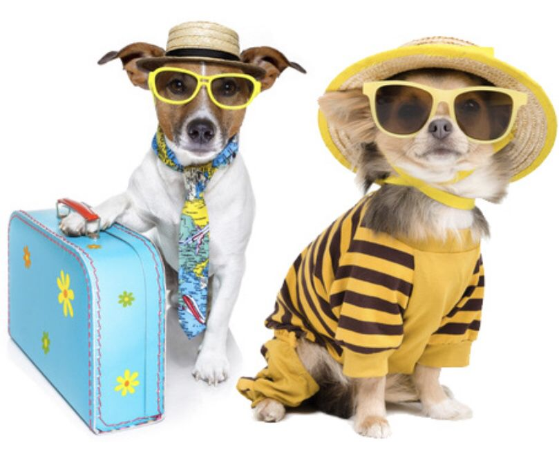 If You Are Looking To Travel Cross Country With Your Dog Or Cat