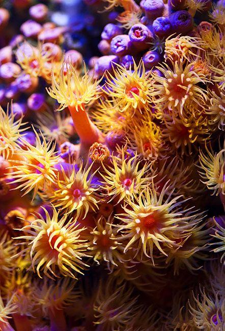 Soft Corals Look Like Artwork