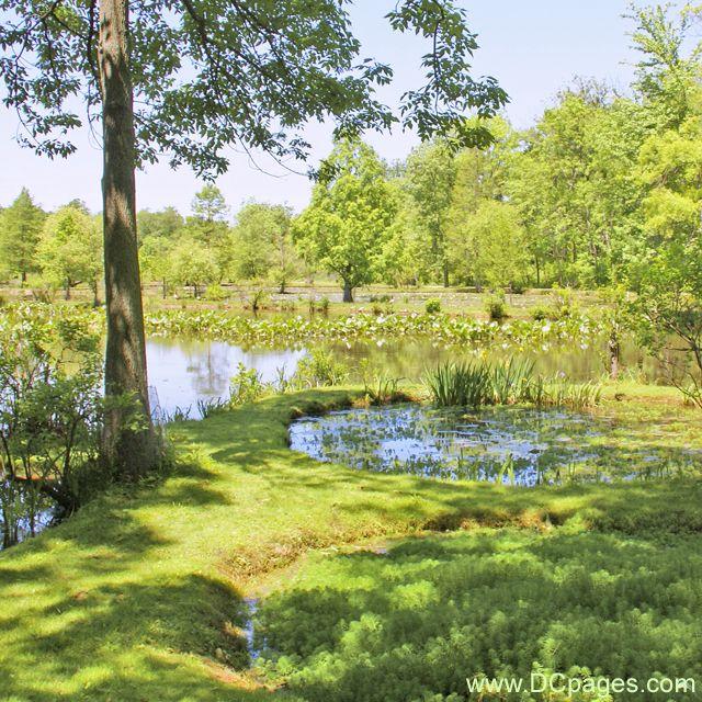 Kennilworth Aquatic Gardens (With images) | Aquatic garden