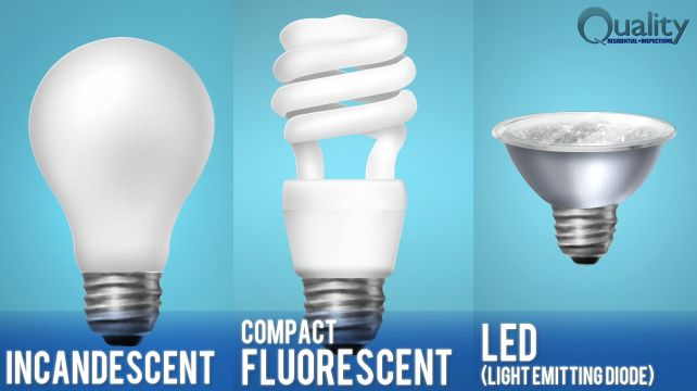 different types of bulbs pdf