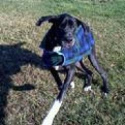 Sampson My Man An Adoptable Great Dane In Baden Pa Great Dane Dogs Dog Adoption Dog Love