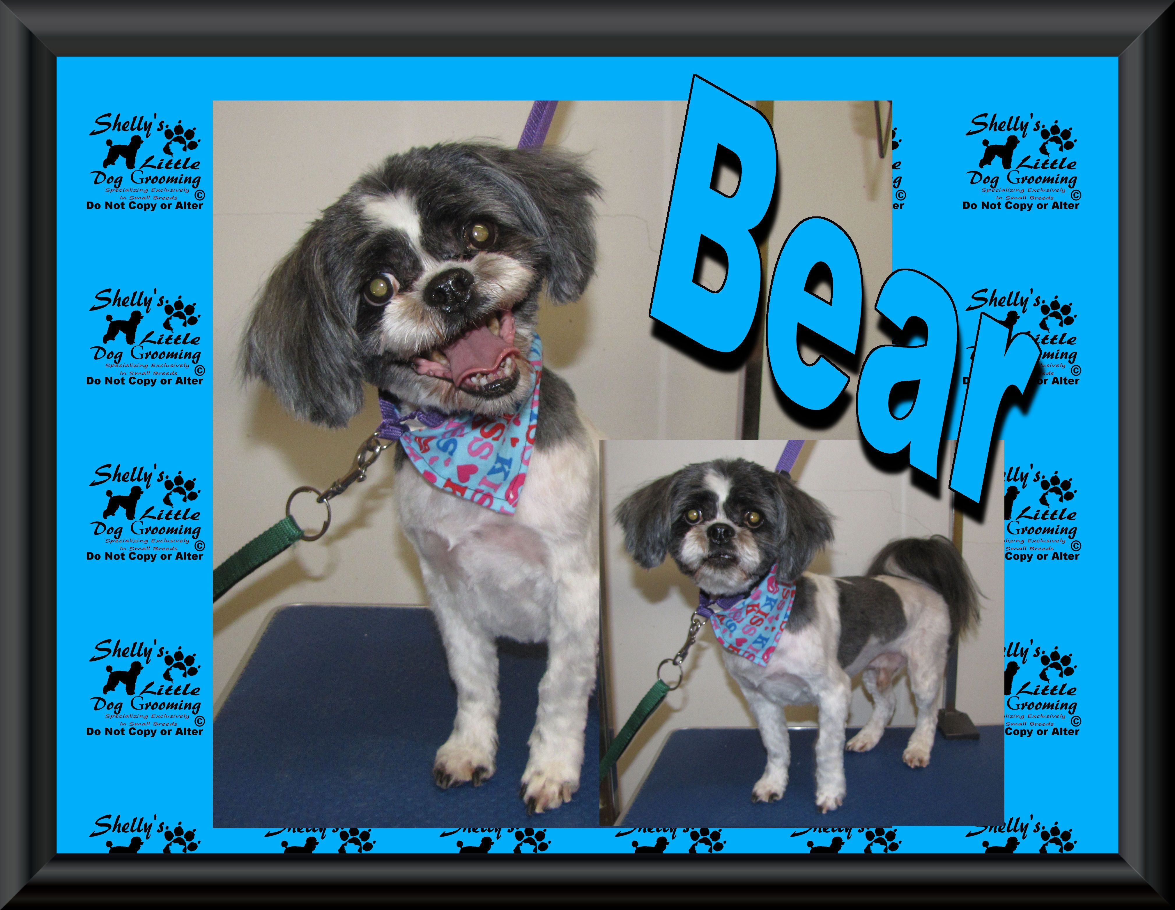 Bear He S A Very Busy Senior Boy And Sadly He Will Be