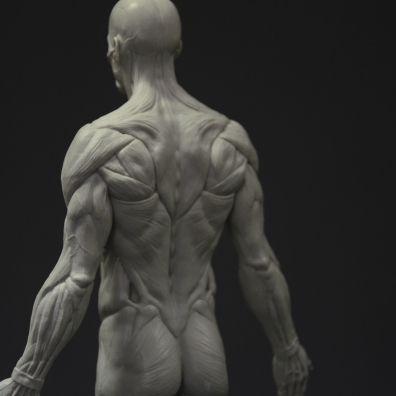 DSC_0730 | 1 | Pinterest | Anatomía, Escultura y Anatomía humana