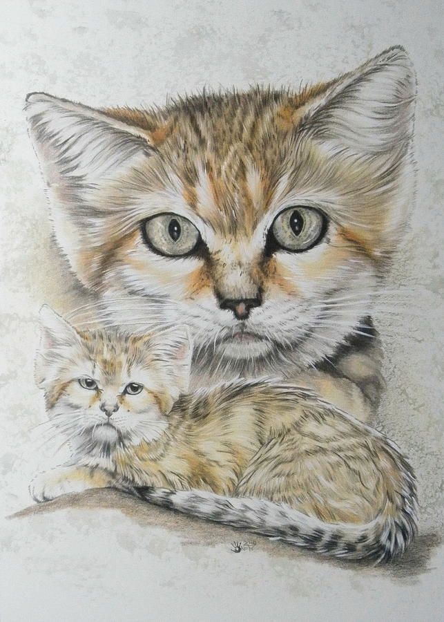 Covert by Barbara Keith in 2020 Small wild cats, Animal