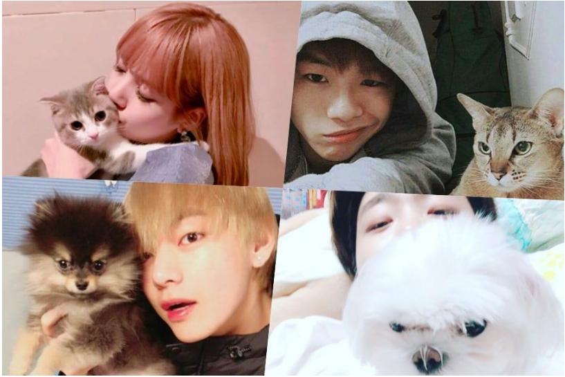 Vật Nuoi Của Thần Tượng K Pop đang Nhận được Tinh Yeu Từ Người Ham Mộ Tren Toan Thế Giới Pets Kpop Idol Idol