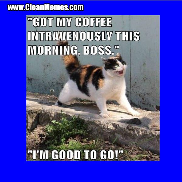 Cleanmemes Cleanfunnyimages Www Cleanmemes Com Funny Animal Pictures Cats And Kittens Puppy Pool