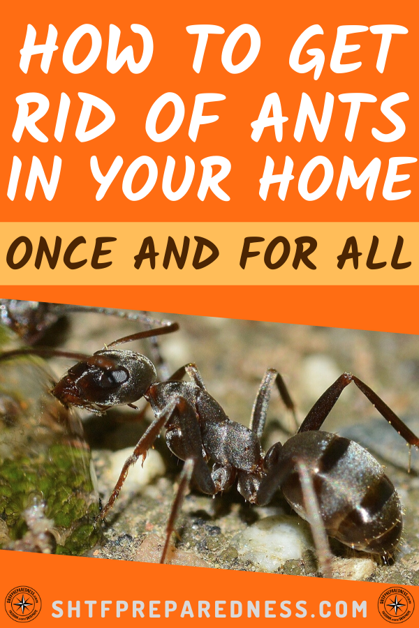 How To Get Rid Of Ants In House Home Remedy