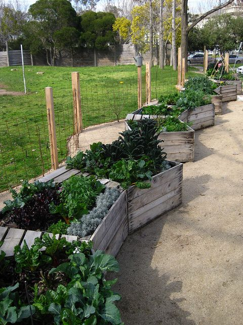 great idea for the patio: Kitchen garden @ Collingwood College by Little Veggie Patch Co, via Flickr