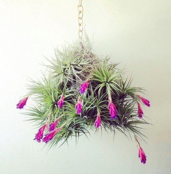 pflanzenball zimmerpflanzen pinterest pflanzen garten und garten pflanzen. Black Bedroom Furniture Sets. Home Design Ideas