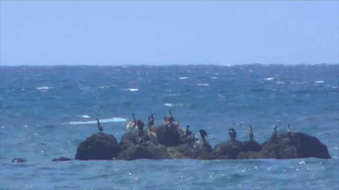 Sighting of mermaids