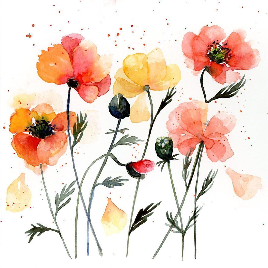 Poppies In My Sketchbook Mohnblumen Aus Meinem Skizzenbuch