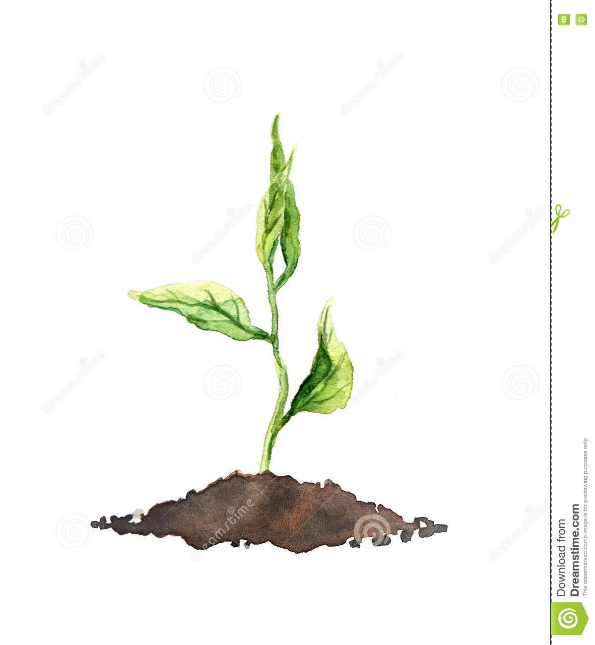 Seed Sprout Watercolor Plant Grow In 2019