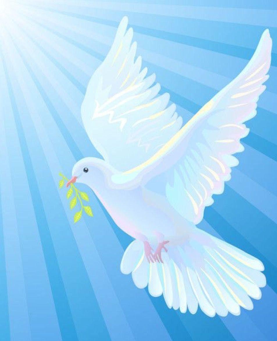 Pin De Rosa Aguirre En Religiosos En 2021 Fotos Del Espiritu Santo Paloma De La Paz Almacenamiento De Arte