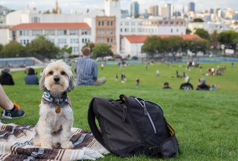 The Best Dog Friendly Spots In The East Bay Dog Friends Hiking