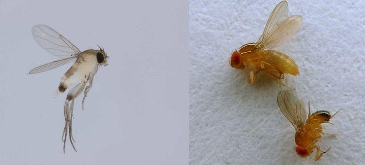 Kleine Fliegen In Blumenerde Bekampfen Diese Tipps Helfen Schimmel Trauermucken Vertreib Kleine Fliegen In Blumenerde Fliegen In Blumenerde Kleine Fliegen
