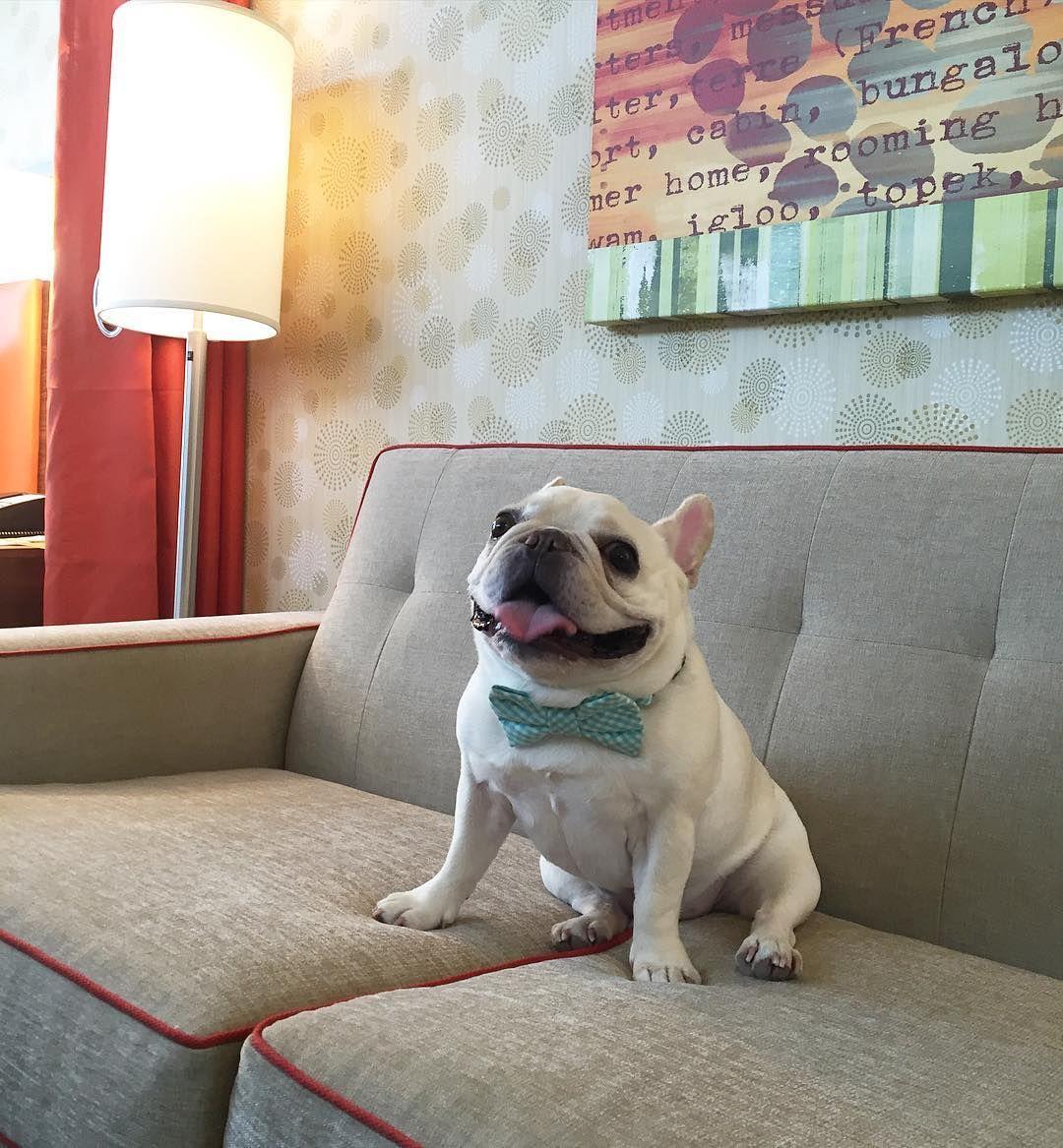 dog イヌ 犬可愛い画像まとめ http://ift.tt/1Vk1mEy