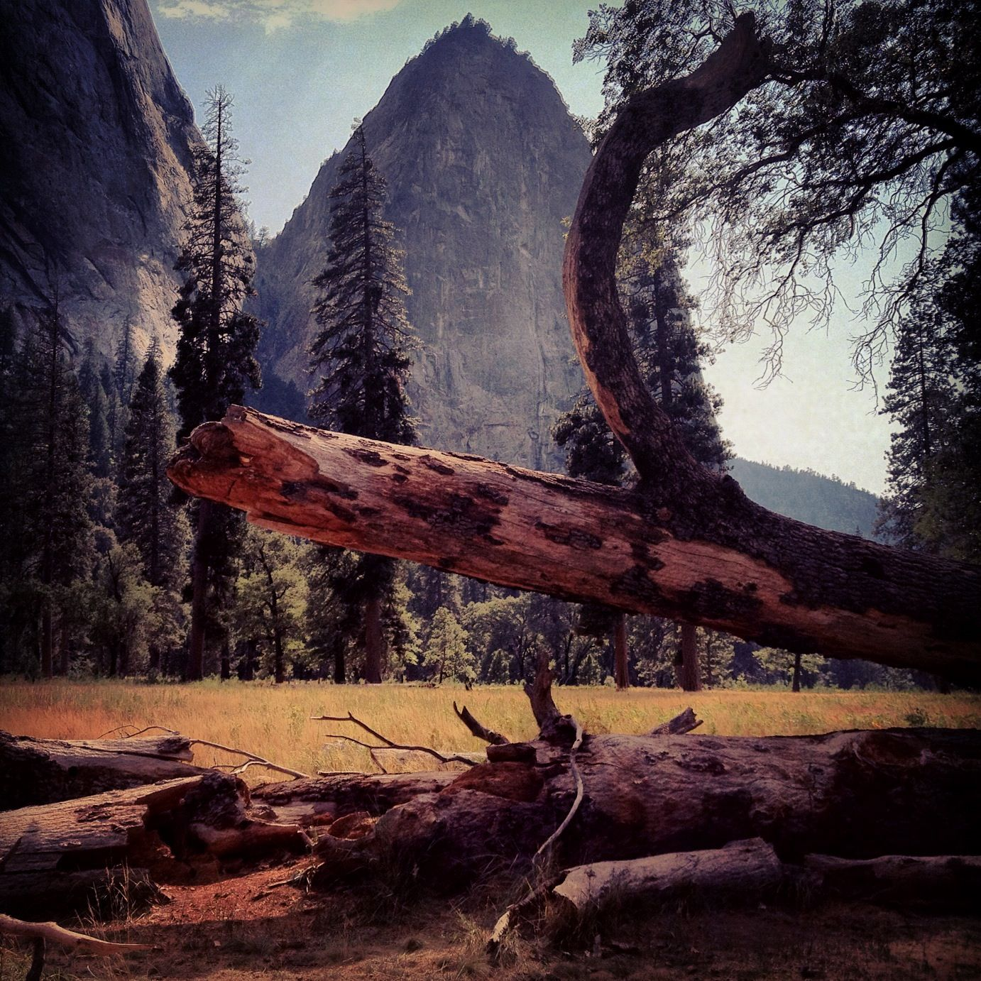 Phoneography Challenge: Yosemite Valley Weekend Trip @Photojojo @Brit Morin