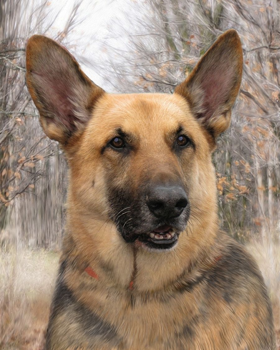Max the German Shepherd by Mary Jill Lemieur Digital Mixed