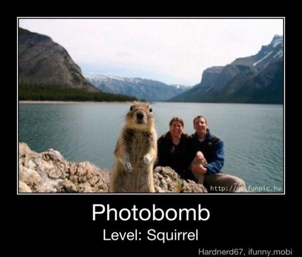 level : squirrel