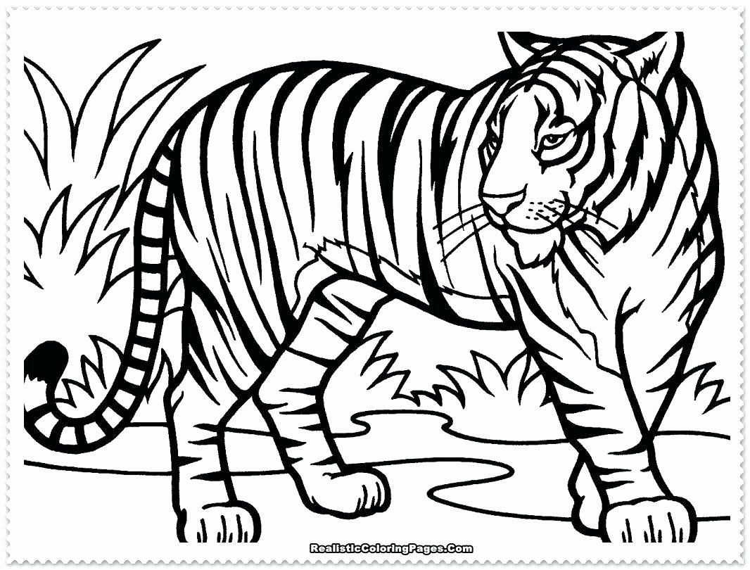 Cartoon Coloring Tiger Fresh Coloring Pages Of Detroit Tigers