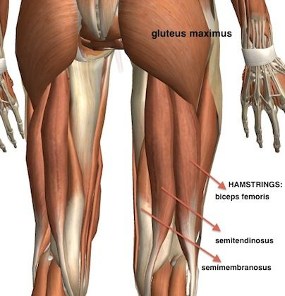 23++ Where is my hamstring located ideas in 2021