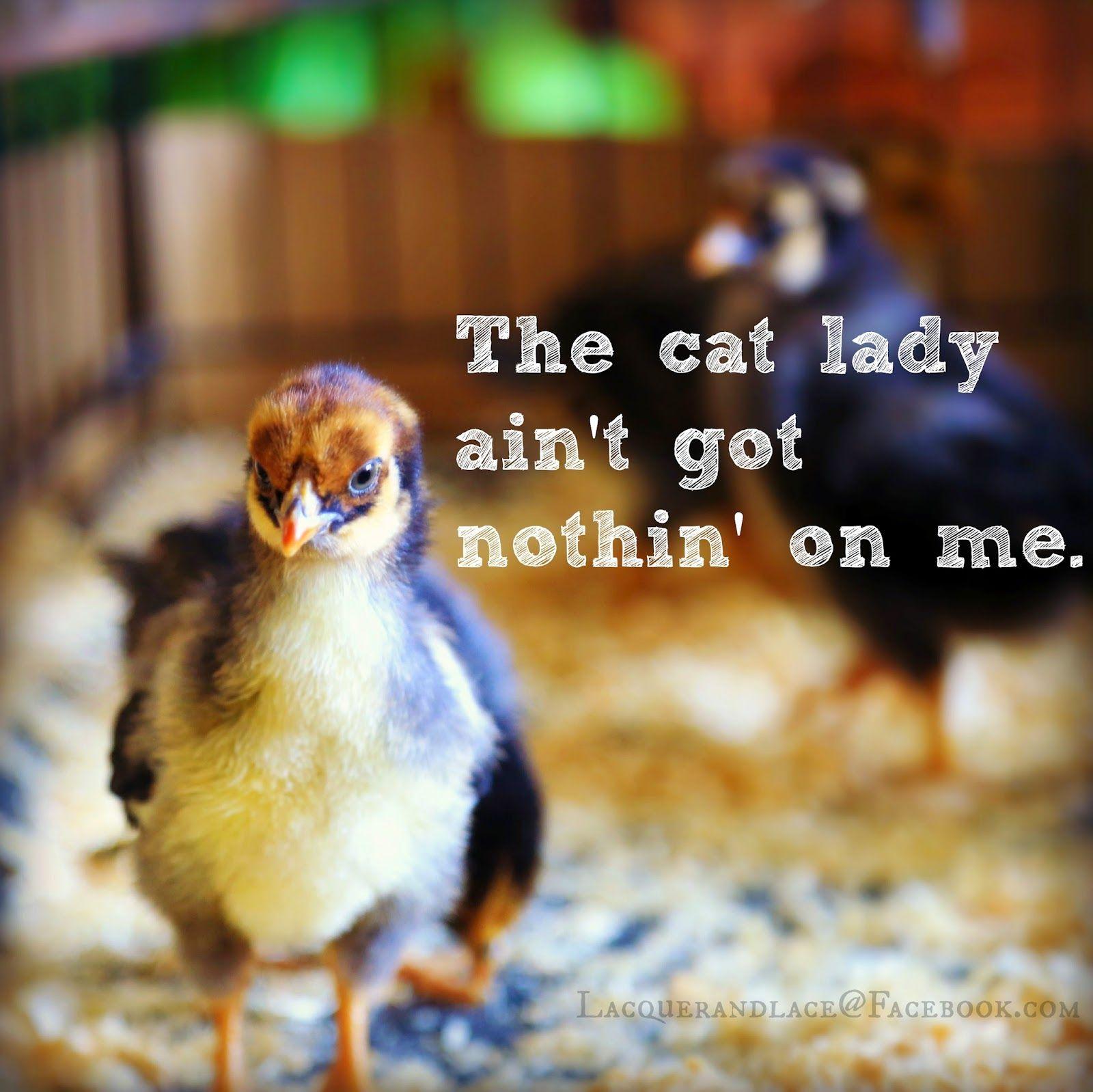 Lacquerandlace Chickens backyard, Crazy chicken lady