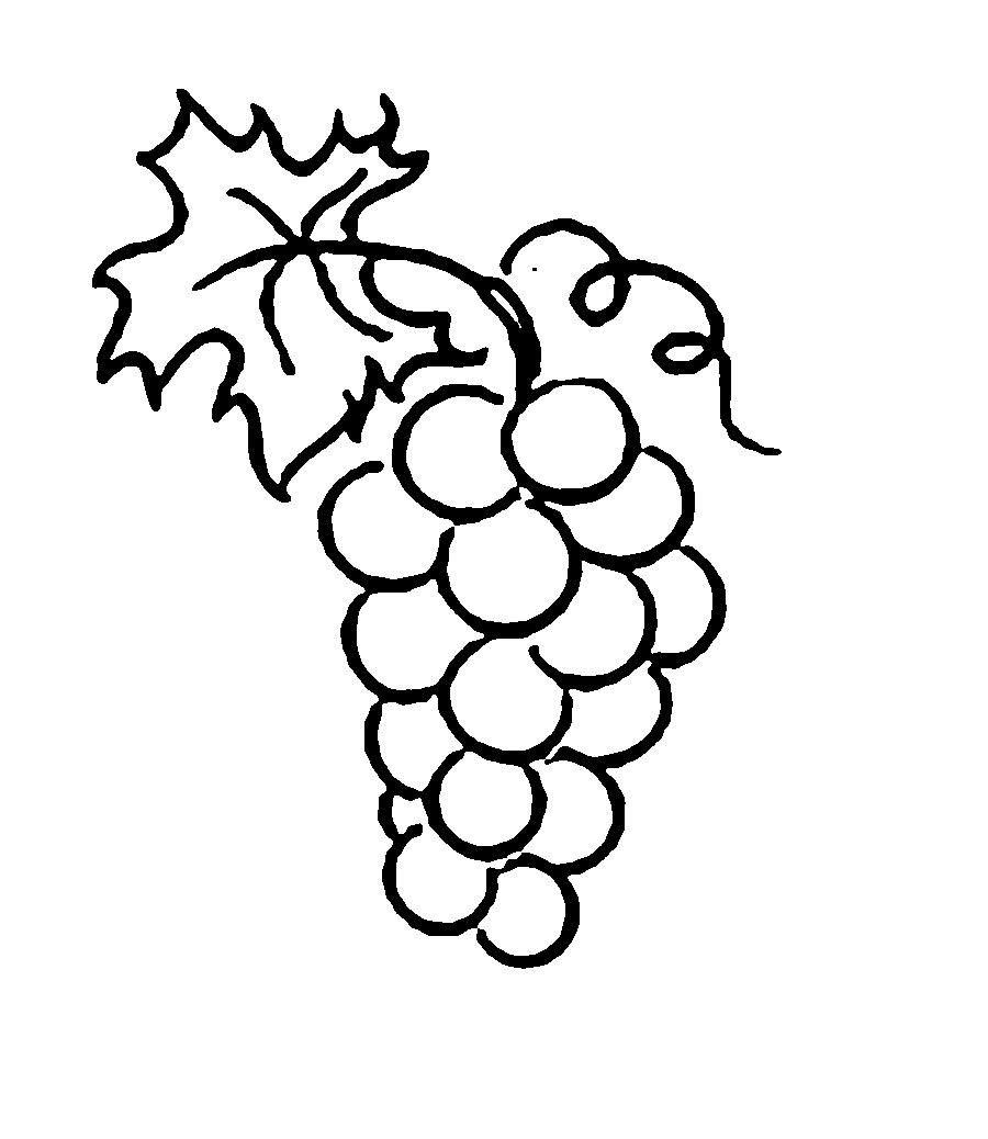 Картинки по запросу виноград раскраска | Раскраски ...