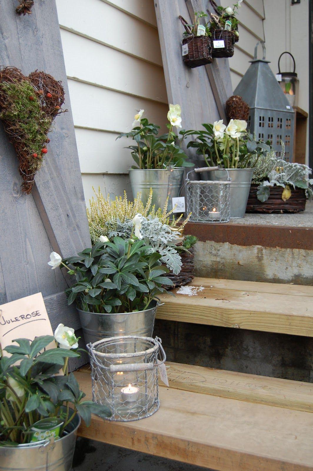 Anemone haust r eingang pinterest garten garten - Hangepflanzen garten ...