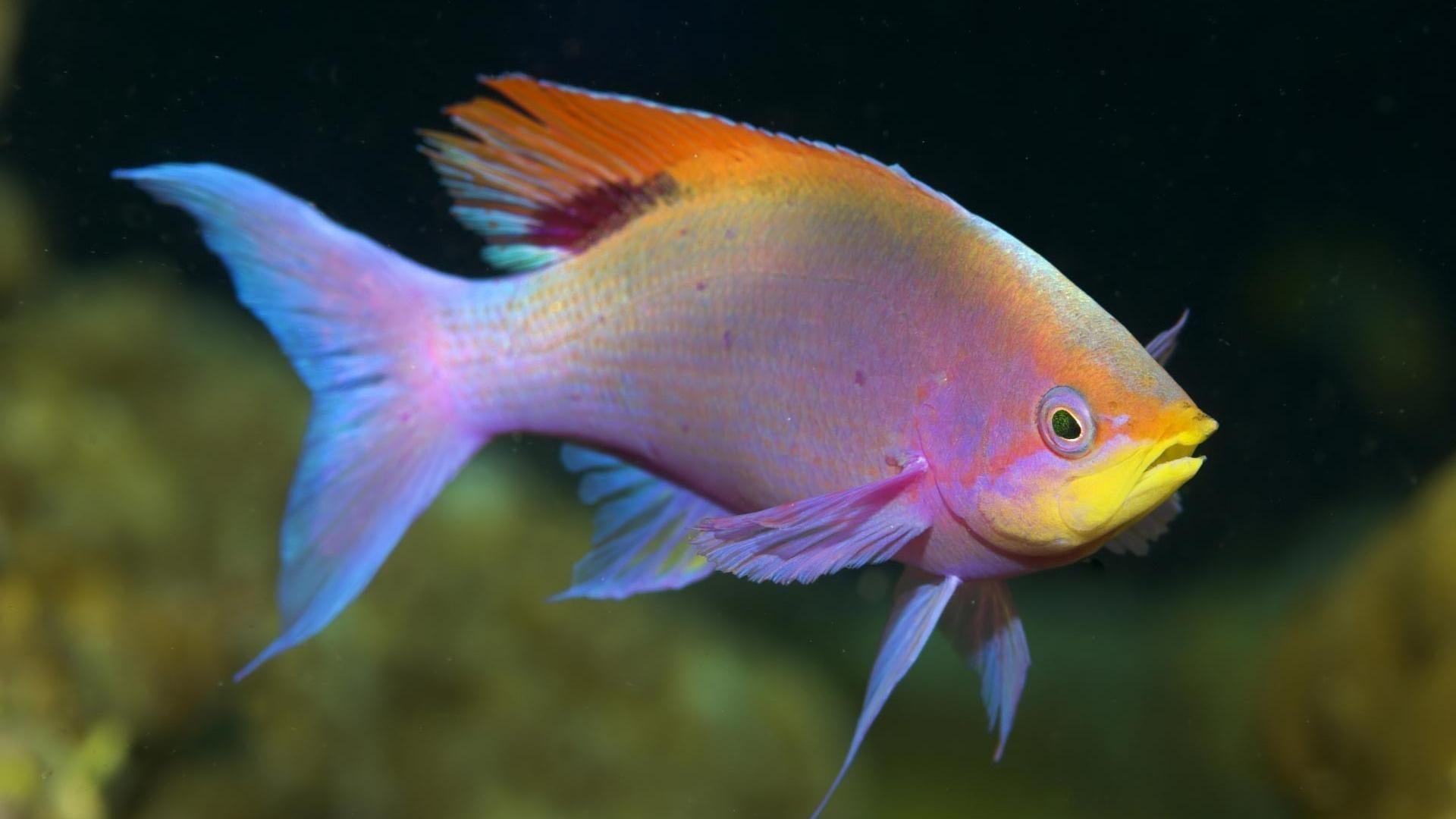 Lovely Fish Fish Wallpaper Beautiful Fish Water Animals Deep Sea Animals