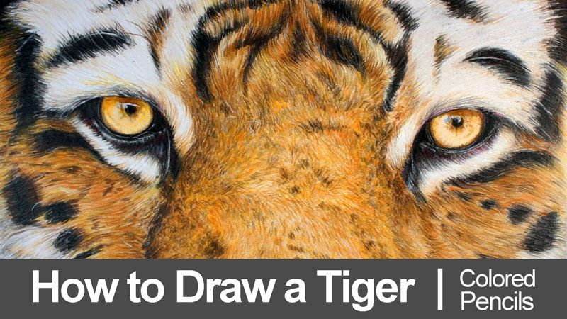 Learn how to draw tiger eyes with colored pencils in this lesson. #colored pencils #drawing #tigers