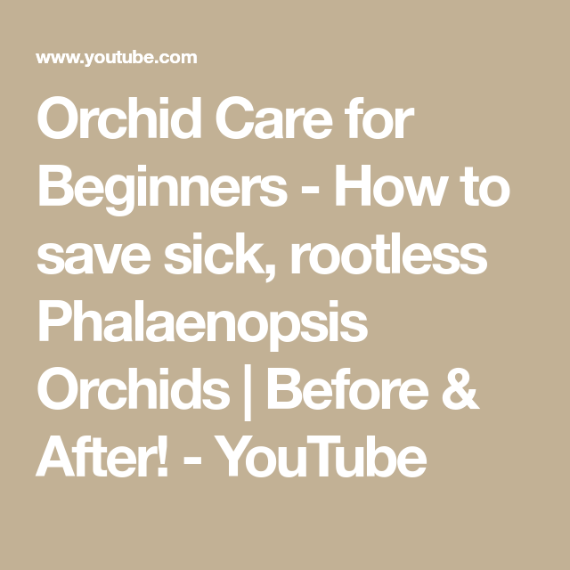 Photo of Orchid Care for Beginners – How to save sick, rootless Phalaenopsis Orchids | Before & After!