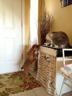 DIY Elevated Cat Feeding Station Joyfully Jensen My duo