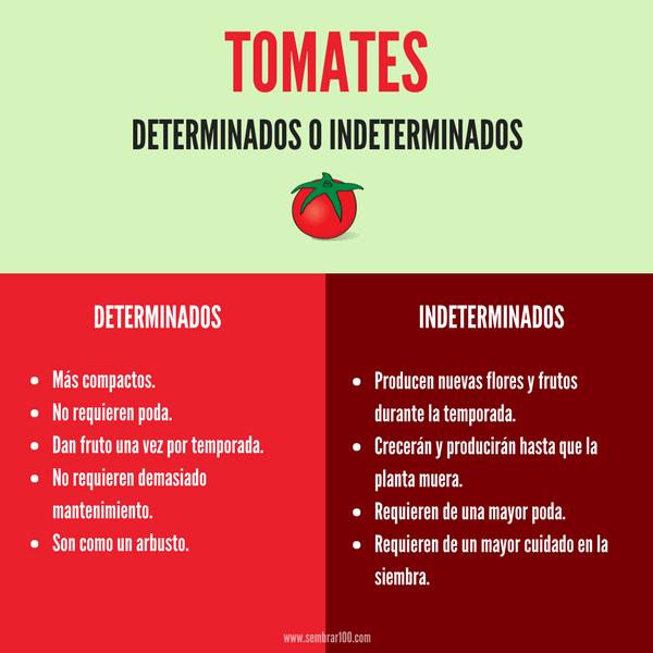 Sembrar Tomates En 13 Pasos Todo Lo Que Necesitas Saber Sembrar Tomates Siembras Tomate